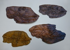 Four Tromso Seals
